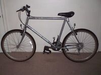 "Diamond Back Camarillo 23"" Mountain Bike"