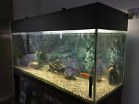 Coldwater Aquarium (4ft x 2ft x 1.5ft)