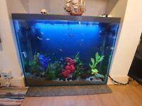 Fish Tank & Full Set Up