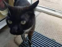 Found friendly cat