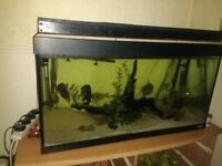 Fluval 200 tank with tropical fish and equipment. Custom lid & LED lights, Ready to go. £100