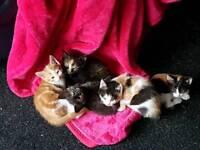 2 female kittens ready now