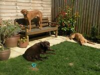 'HAPPY HOUNDS' Dog Walker / Day Care / Holiday Care / Dog Sitter - for happy dogs and happy owners!
