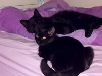 MISSING - FEMALE BLACK CAT IN PORINGLAND
