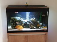 Fluval Roma 125 Full Setup: Eheim filter, heater, LED lights upgrade and cabinet - Must see