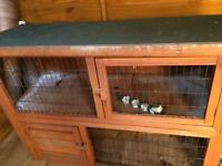 Rabbit hutch good condition