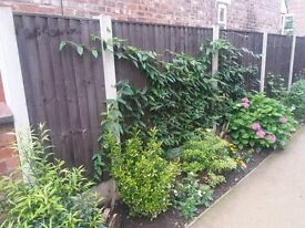 FENCE PANELS.5FT AND 6FT HIGH TOP QUALITY. £20 EACH.