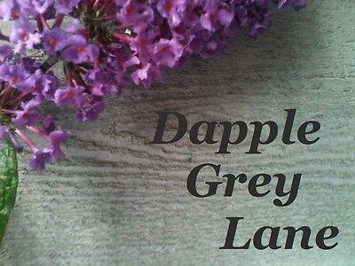 Dapple Grey Lane