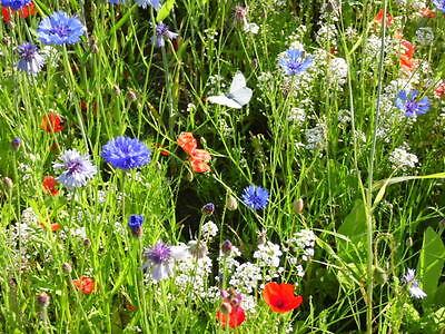 Das bühende Kornfeld Wildblumen Kornblumen Mohn Blumenwiese Naturwiese