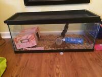 SELLING FEMALE RAT 10$ TANK AND FOOD IF WANTED FOR 30$