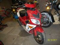 PULSE LIGHTSPEED 50 cc boation scout 50cc