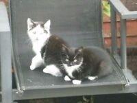 2 Beautiful Kittens