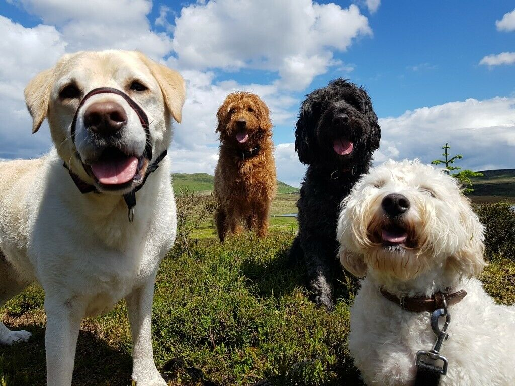Tell Me a Tail Pet Sitting and Dog Walking (Licensed/Insured Pet Sitter/Dog  Walker in Inverclyde) | in Greenock, Inverclyde | Gumtree