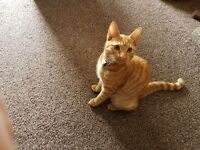 Two Cats for sale - 5 month old Kitten & a Young Adult Cat need a new home - Basildon, Essex.