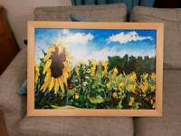 Sunflowers in France, timmy mallet. Official framed print