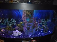 250 litre bow front jewel tank mint condition full spectrum led lights 2 of external filter, 500ono