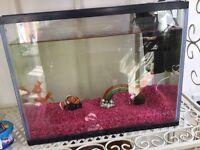 Two gold fish and fish tank and pump
