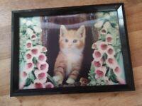 Framed moving hologram picture of kitten