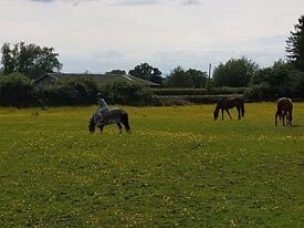 Summer Live-in/Out Aupair/Mothers Help for immediate start (experience with horses required)