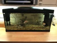 80 litre tropical/ cold water fish tank with filter, stones and heater