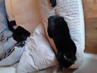 Kitten & Cat