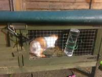 Rabbit and hutch 12 weeks old
