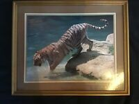 Large Framed Photograph Picture of Tiger.