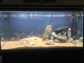 200+ litre fish tank aquarium