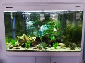 Tropical Aquarium - Complete Set Up - For Sale - MUST GO. New Low Price.