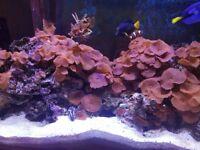 10kg live rock with established coral