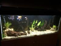 BEAUTIFUL FISH TANK WITH FISH AND EXTRAS