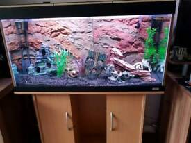 Fluval Roma 200l full set up everything included