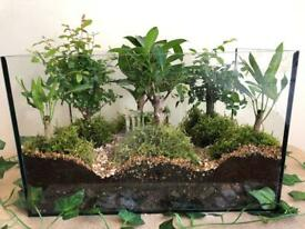 Hand made Bonsai forest terrarium - indoor bonsai trees ,easy to look after