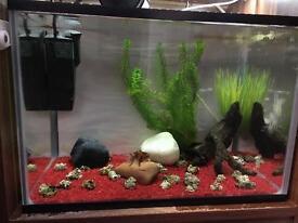 Gold fish Fish tank