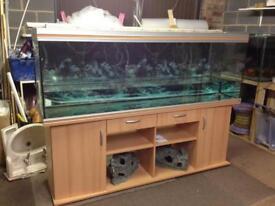 6ft rena fish tank set