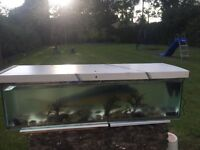 Large fish tank with pond fish