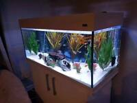 Tank with cabinet