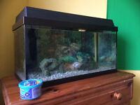 Fish Tank - 60 litre aquarium / 4 fish / full kit plus lots of accessories