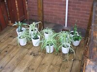 FREE HOUSE PLANTS