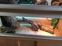 Bearded dragons for sale full set up