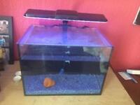 Nano 10 liter fish tank