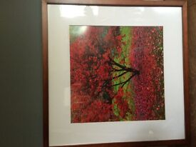 Next red and green framed tree picture