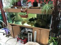 6,5 ft fish tank with stand