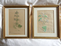 Two Framed 18th Century Botanical Engravings - Hand Coloured