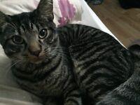 Missing cat Kirkcaldy (chapel area)