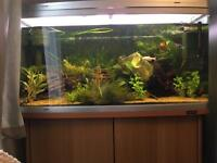 Fish tank with stand 3ft 9""