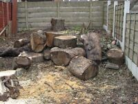 Large tree trunks ideal for wood burners to cut and collect
