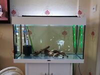 JUWEL FISH TANK - WHITE INCLUDING STAND AN LIGHT
