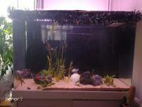 280l fish tank