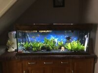 Aquarium for sale : Complete Mature Custom made aquarium
